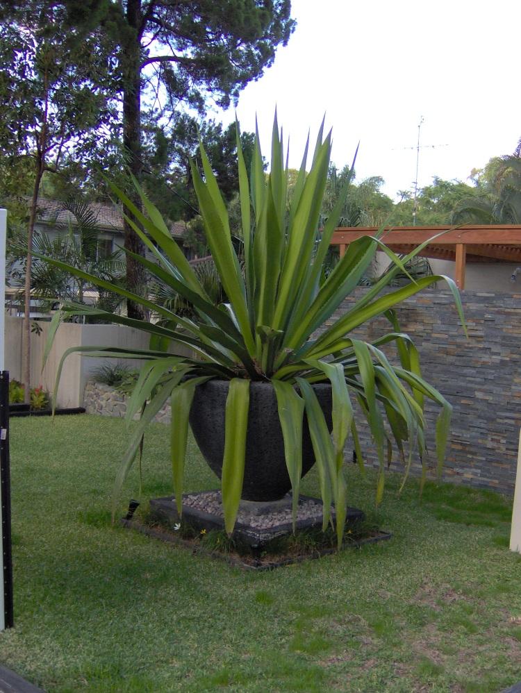 outdoor garden pots brisbane. pots outdoor garden brisbane