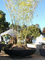 giant japanese style plant bowl on base plinth, black scoria lava stone finish, plants or water feature