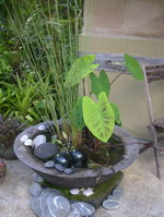 large garden water bowl with plant on base, charcoal volcanic scoria finish