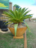 large garden planter bowl with plant and base, iron verdi lava stone finish