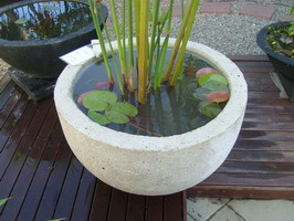 large garden water bowl with plant, off white volcanic scoria finish