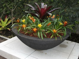 large outdoor planter bowl, black scoria lava stone finish, planted with spectacular bromeliads