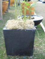 Striking structural larger tapered square planter especially for feature bamboo or smaller tree where low centre of gravity is required for high wind areas or taller plants. square tapered planter, smooth contemporary or black volcanic scoria finish