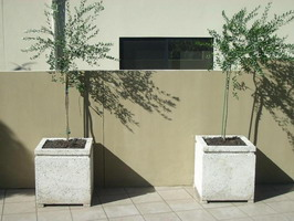 custom made large off white square planters for olive tree court yard, off white lava stone finish
