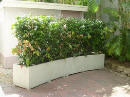 curved garden hedge planter boxes, white semi formal finish