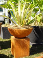 Semi formal finish bowl and plinth feature planter. Iron Verdi finish. plant in bowl is a fracea